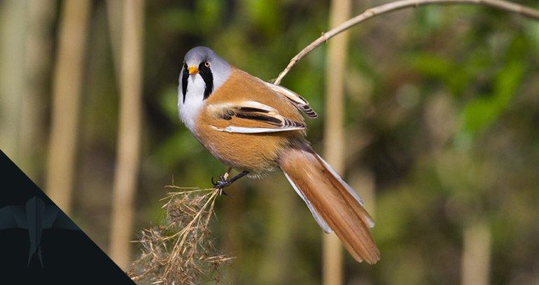 Nadzór ornitologiczny nad inwestycją