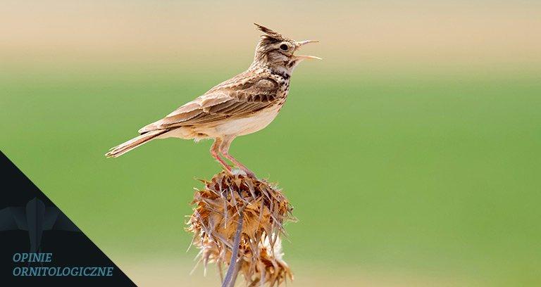 ornitolog szczecin
